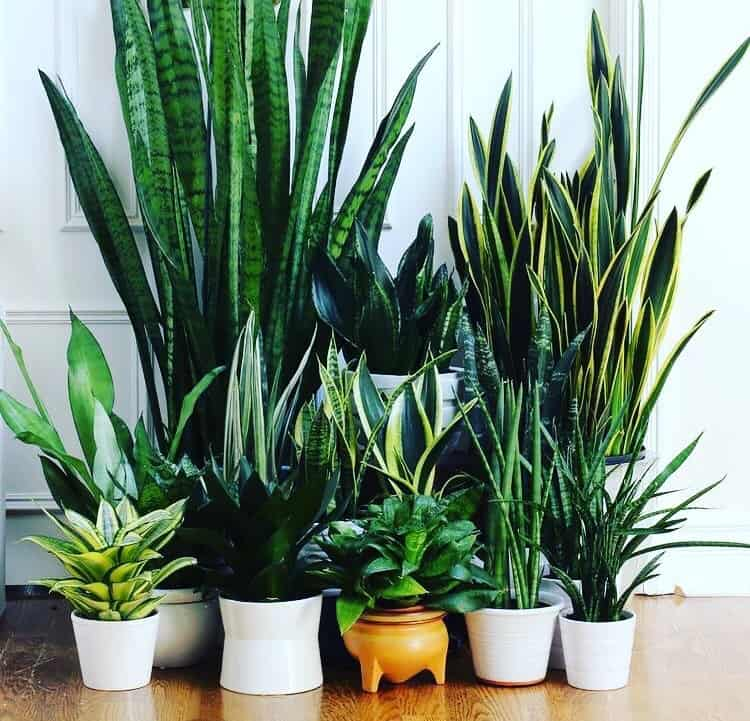 12 healthy easy care air purifying plants to make your for Buy air purifying plants