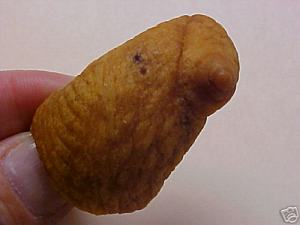 pig nipple - Found Pork Scratching Pictures