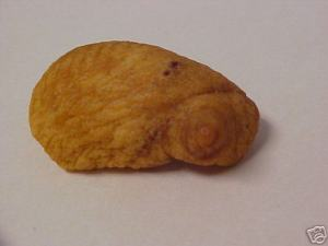 pig nipple2 - Found Pork Scratching Pictures