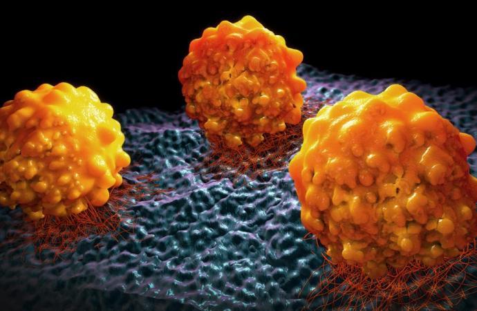 Un programme national pour prévenir le Cancer du col de l'utérus
