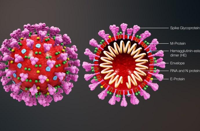 Coronavirus: 2 nouveaux cas détectés