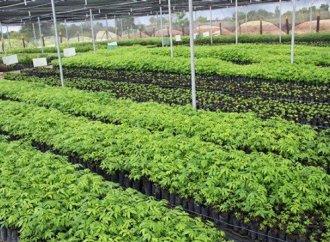 La Banque mondiale plaide pour la transformation des systèmes agricoles et alimentaires en Amérique latine et dans les Caraïbes