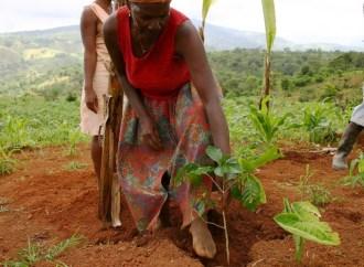 L'agriculture haïtienne en voie d'extinction, déplorent des agronomes