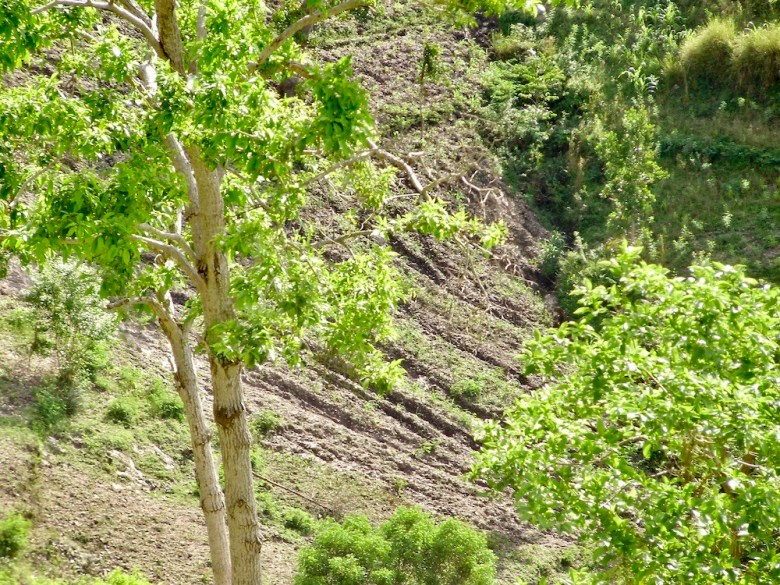 Haiti mountainside