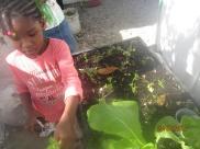 girls cuting parsley