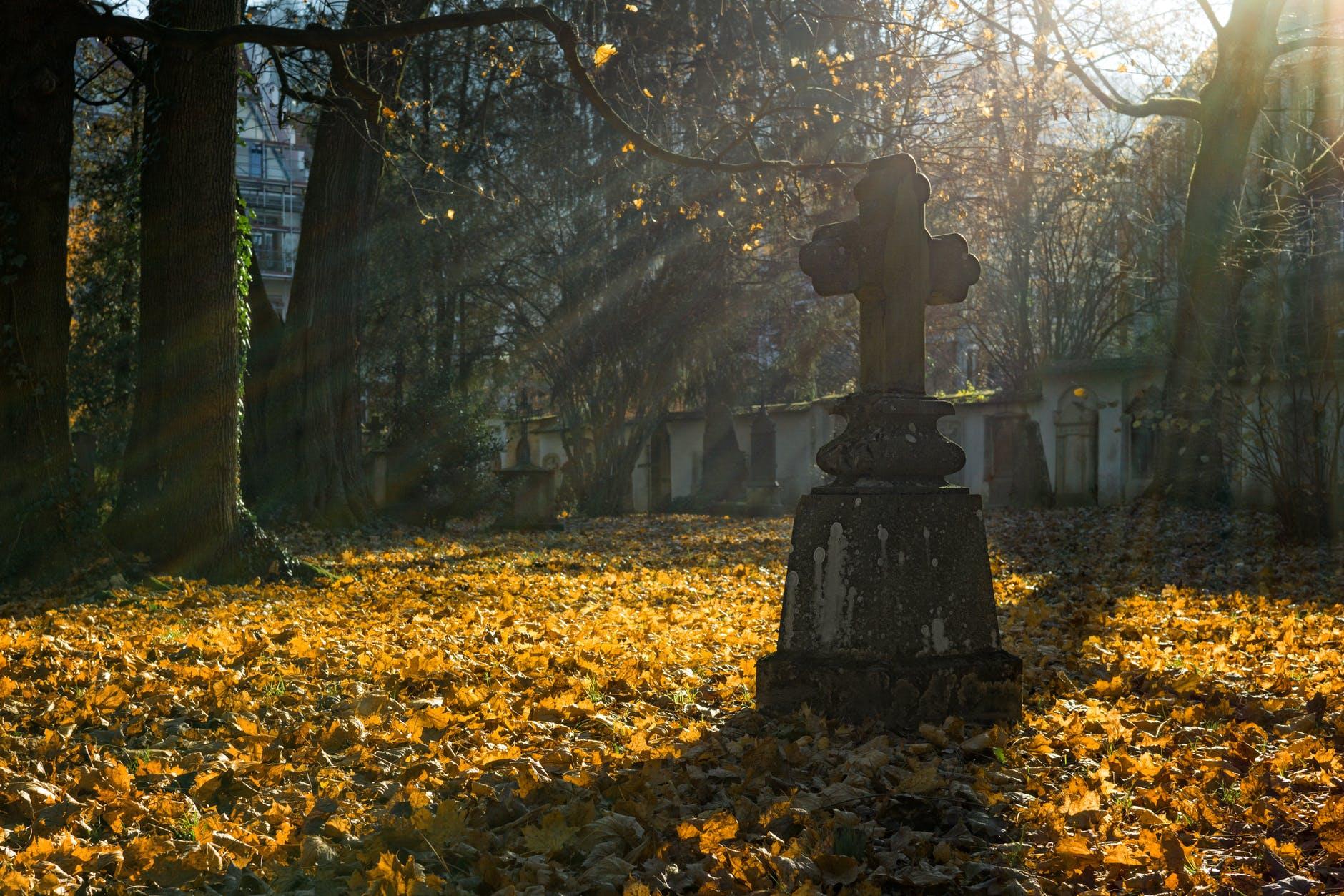 branches cemetery cross daylight