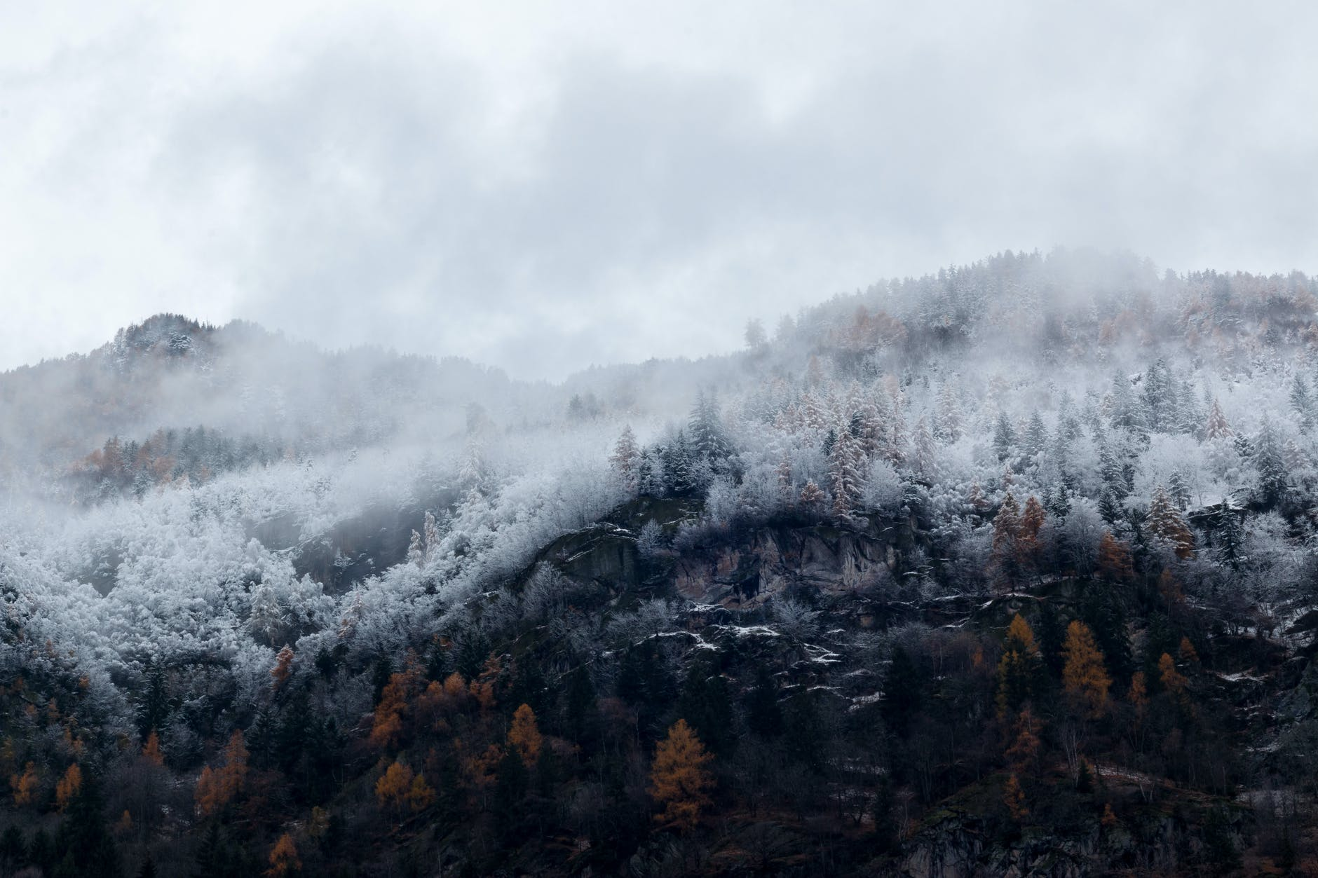 mountain surrounded by trees with snows