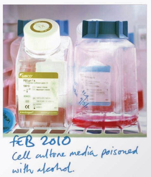 141111 細胞培養液