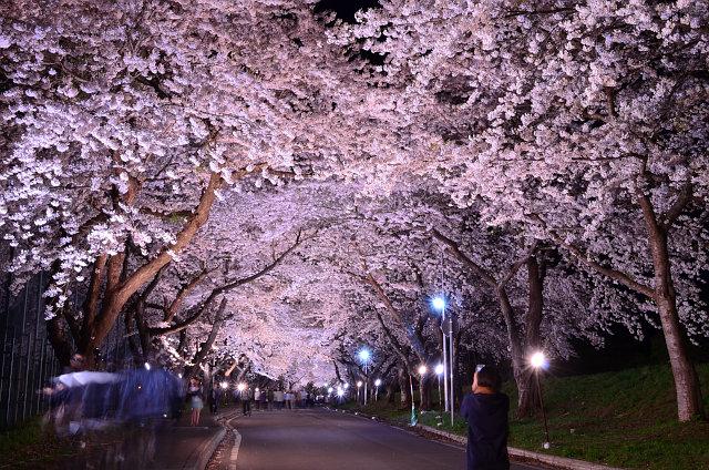 北斗桜回廊・大野川沿い桜並木