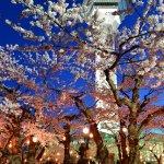 一番詳しい!2015函館・周辺のゴールデンウィークイベント一覧