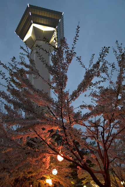 五稜郭タワーとお花見電飾