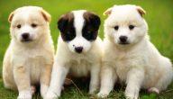 ما هي أنواع الكلاب واسمائها