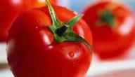 زراعة الطماطم وفوائدها