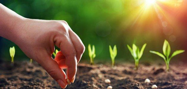 احتياجات النباتات للنمو وما هي العناصر الكبرى والصغرى التي يحتاجها النبات