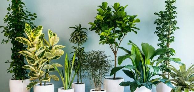 الاعتناء بالنباتات المنزلية 2021