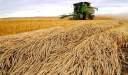 كيفية حصاد القمح تعرف على المحصول رقم واحد عالميا