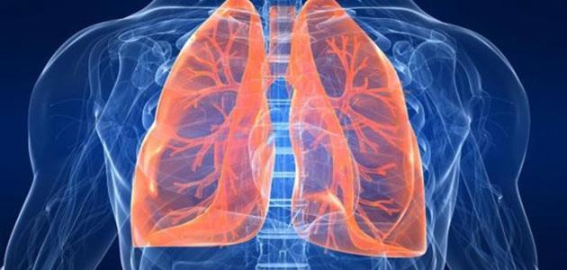 مكونات جهاز التنفس عند الإنسان .. لمحة عن أبرز نقاطه التشريحية