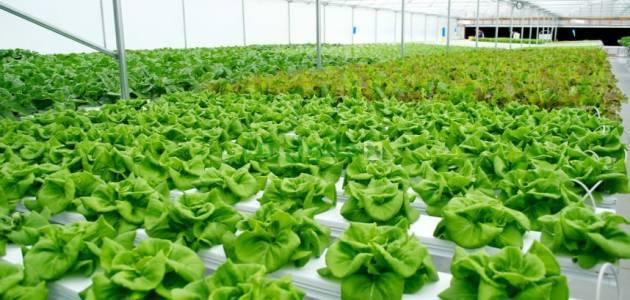 مفهوم الاستثمار الزراعي وتعريفاته..أهم أنواع الاستثمار الاقتصادية