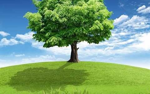 فوائد الشجر وكيفية المحافظة عليه..فوائد سببت بقائنا على قيد الحياة