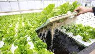مكونات الزراعة المائية تعرف عليها 2021