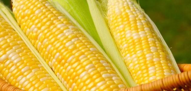 فوائد حبوب الذرة..تحافظ على صحة القلب وتحمي من السرطان وأكثر