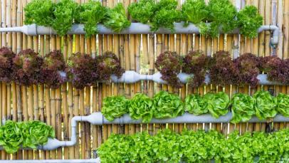 طرق الزراعة المائية