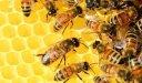كم يستغرق النحل لإنتاج العسل