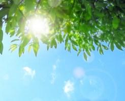 日光アレルギー 薬