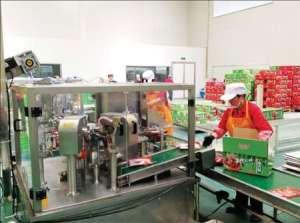Workers pack halal food at Hongshanhe Muslim Food Co Ltd in Yinchuan. Zhong Nan / China Daily