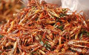 Edible-insects-