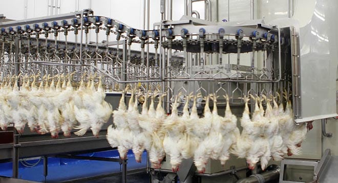poultry-processing-line