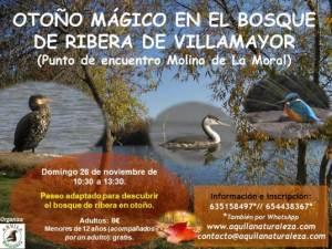 Paseo por el bosque de la Ribera de Villamayor con Aquila