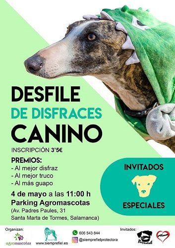 Desfile de disfraces canino