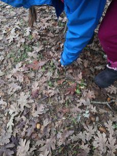 Descubriendo hojas