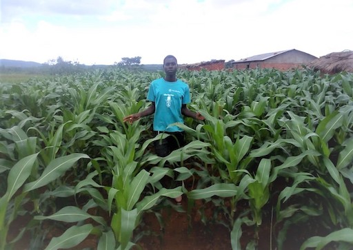 Halcrow Foundation Tiyeni Farming Malawi