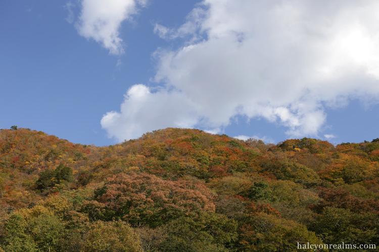 Red Autumn Foliage Nikko