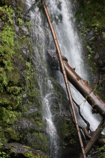 bushwhacking haida gwaii