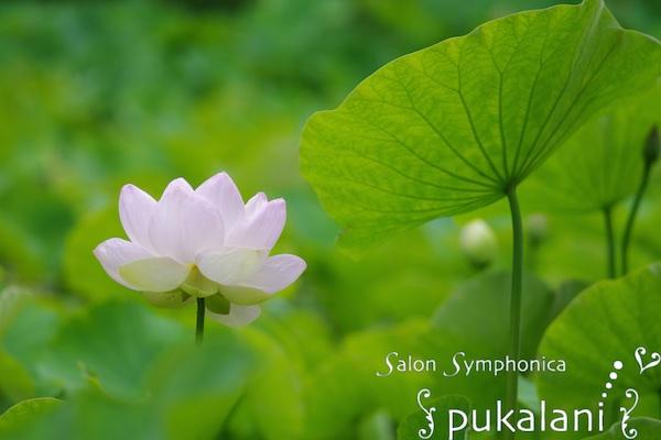 150704_lotus_01