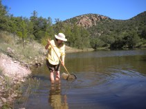 Sampling invertebrates in Arizona