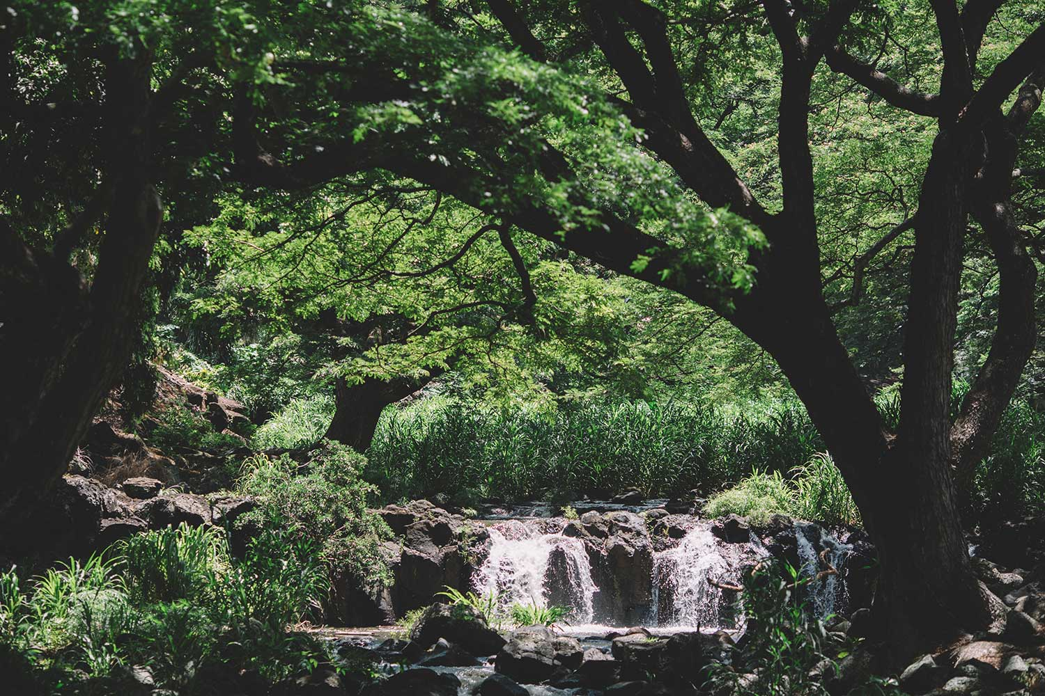 A small waterfall centered in the image with many trees surrounding it