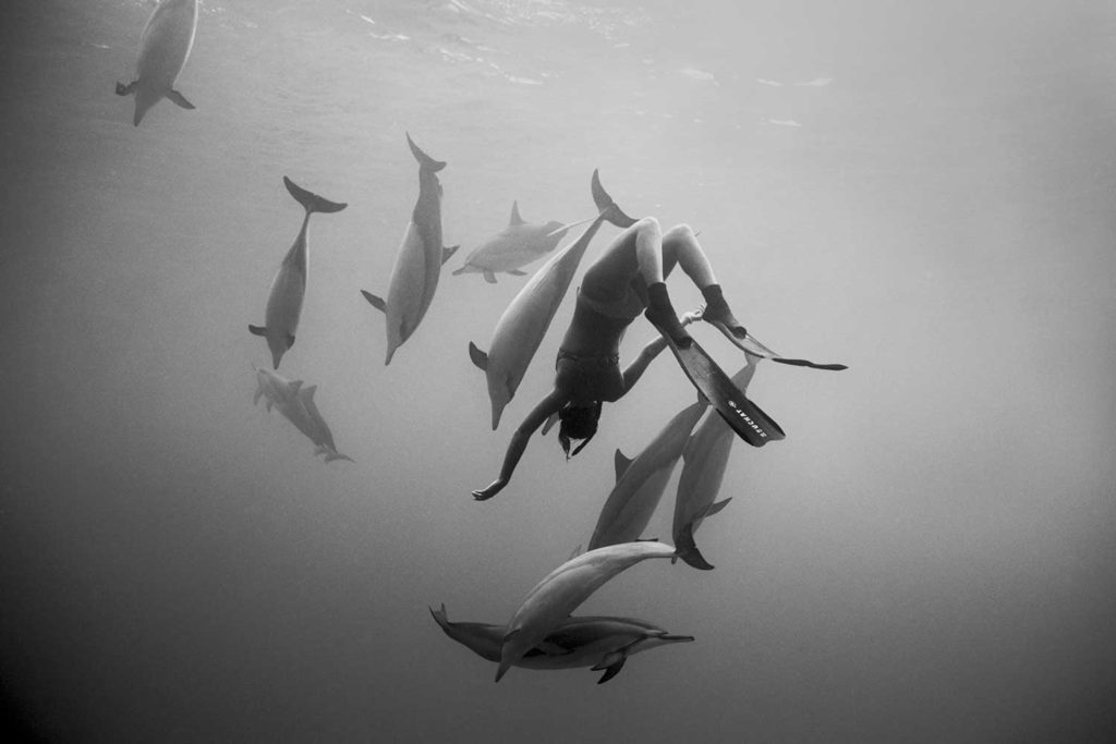 black and white photo of Kimi Werner swimming underwater with dolphins