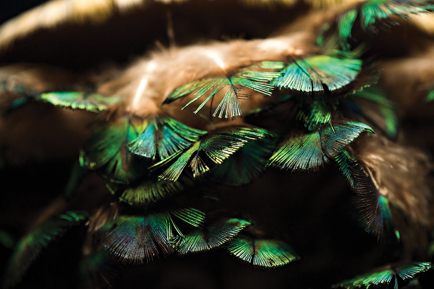Green and brown feathers in a fan shape