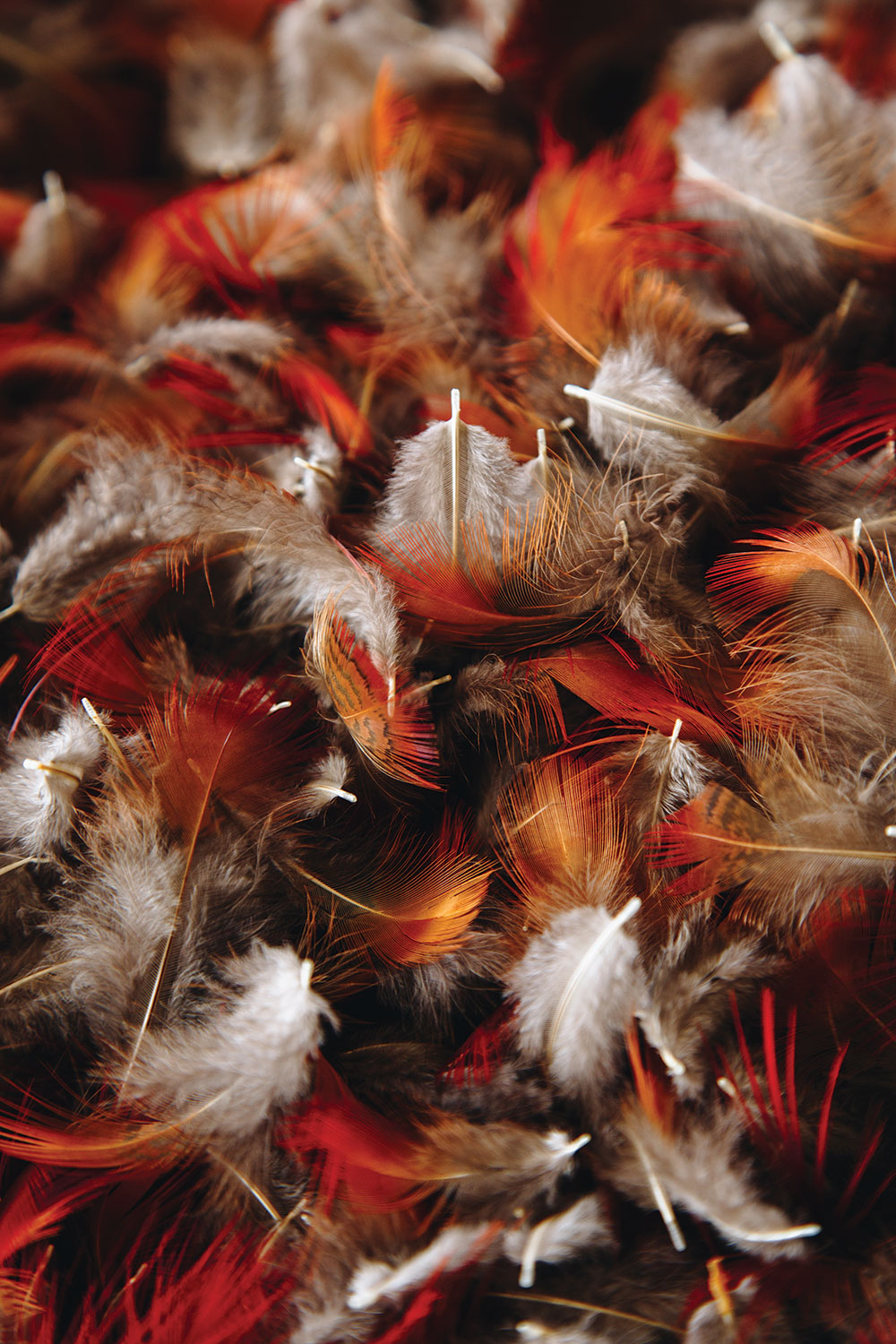 Orange, brown, and white colored feathers in a pile