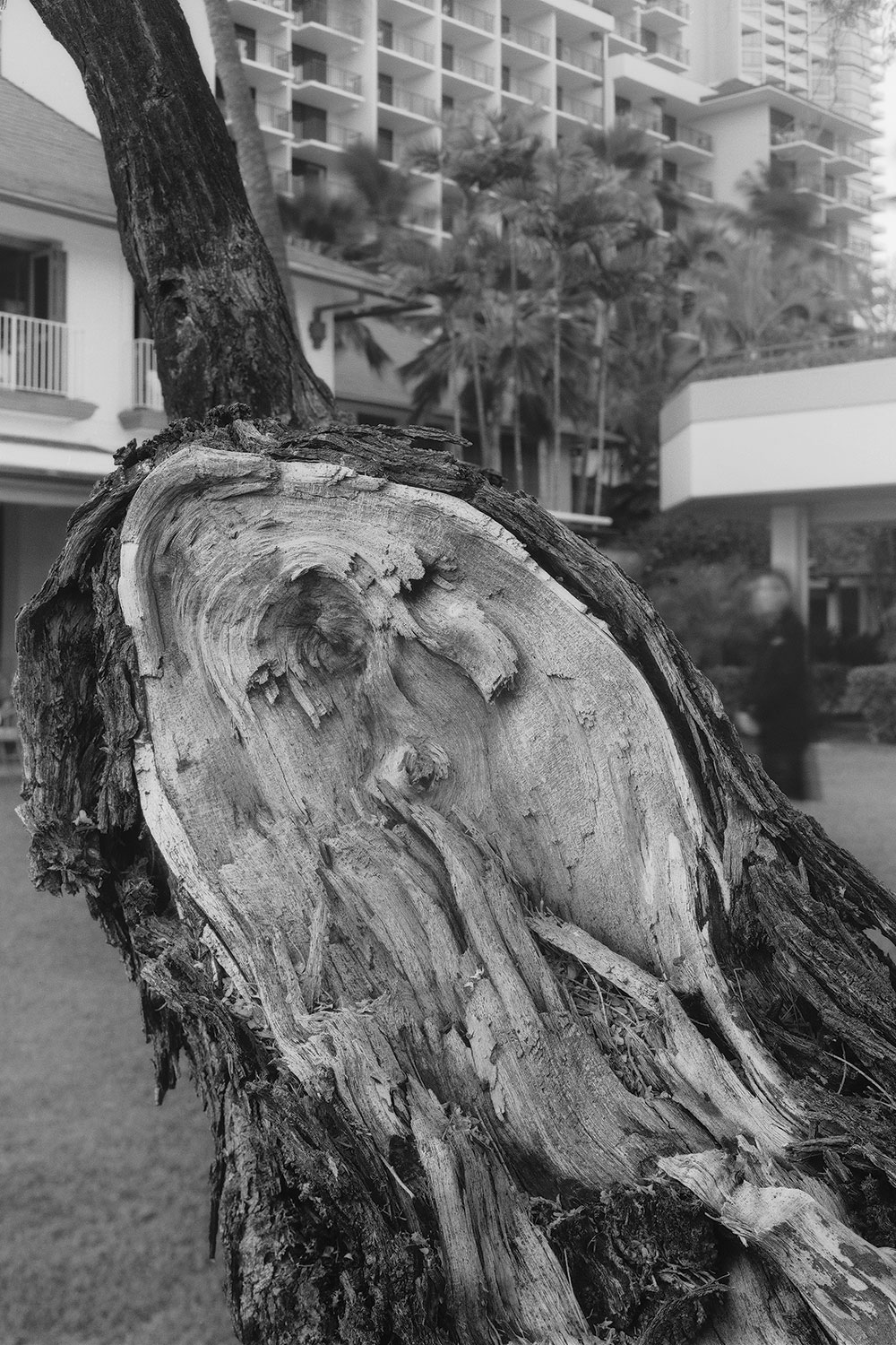 Black and white image of the bark of a kiawe tree
