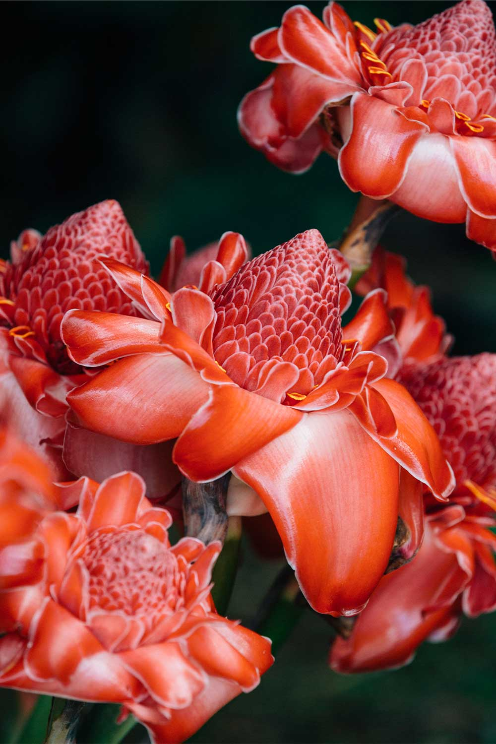 Close up of vibrant red flowers