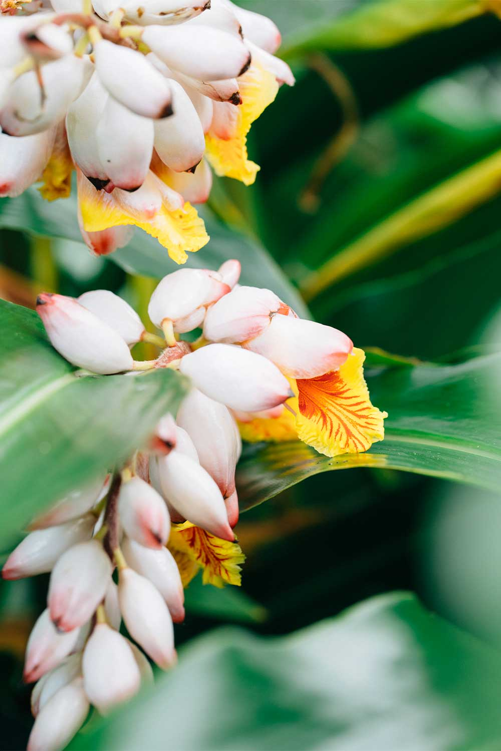 Close up of light pink and yellow flowers