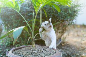 36871833 - white cat fight green snake in untidy dirty garden, danger.