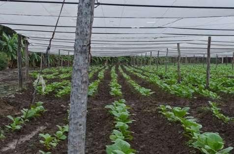 Fields n Farm (13)