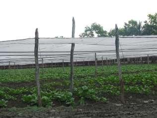 Fields n Farm (36)