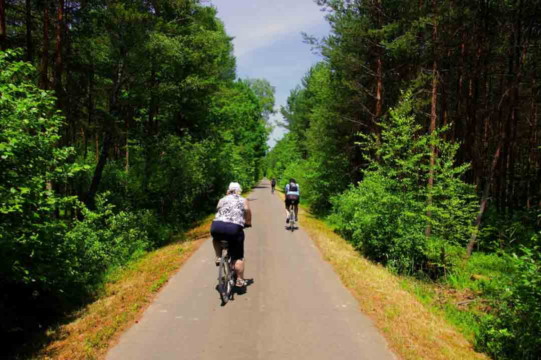 Cyclist riding walking along a cycle path in the wood surroundings of Trebon, South Bohemia.